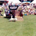 Worstead Festival